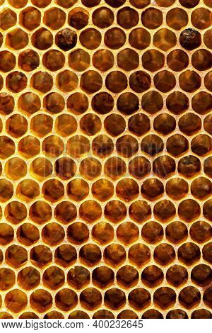Abstraction. Background Texture Of The Site Honeycomb Wax From A Beehive Filled With Golden Honey Fu