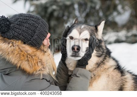 Woman Holding Alaskan Malamute Face With Love In Winter Forest. Close Up.
