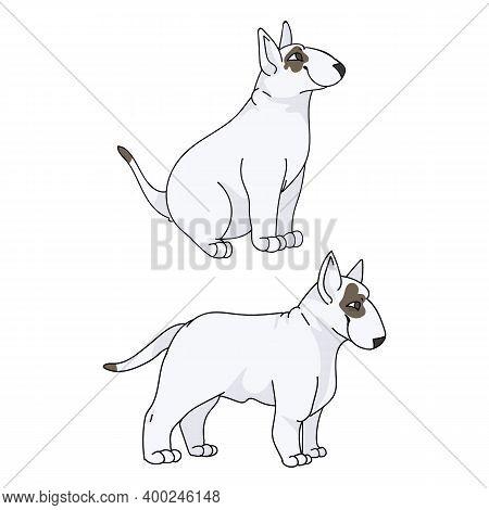 Cute Cartoon Bull Terrier Puppy Vector Clipart. Pedigree Kennel Doggie Breed For Kennel Club. Purebr