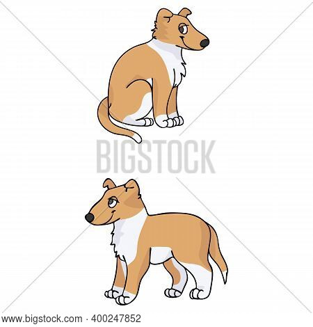 Cute Cartoon Smooth Collie Puppy Vector Clipart. Pedigree Kennel Doggie Breed For Kennel Club. Pureb