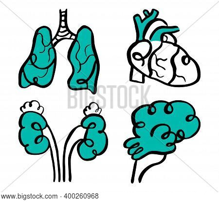 Vector Illustration Doodles Set Of Icons Concept Special Medicine, Neurology, Nephrology, Pulmonolog