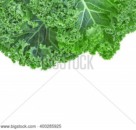 Kale Leaf Salad Vegetable Isolated On White Background. Greens Border. Creative Layout Made Of Kale