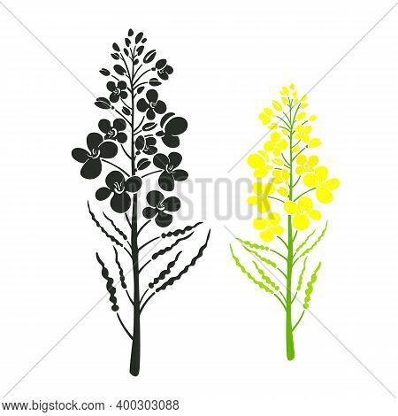 Rape Vector Set, Blooming Brassica Napus Yellow Flower, Botany Canola Icon. Healthy Food. Hand Drawn