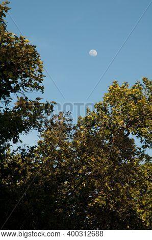 Forest And Full Moon In Bandhavgarh National Park. Madhya Pradesh. India.