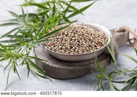 Hemp Seeds, Cannabis Plant Cbd.cbd Oil Hemp Products. Cbd Oil Cannabis Extract, Medical Cannabis Con