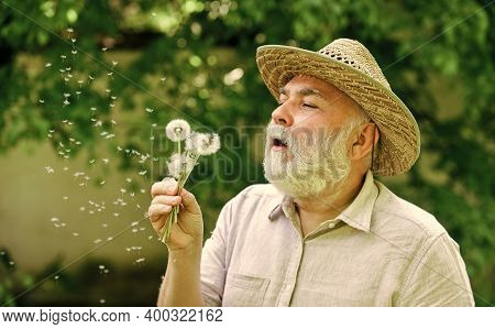 Spring In My Head. Old Age And Aging. Spring Village Country. Symbol Of Thin Gray Hair. Old Man Blow