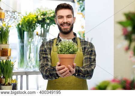 gardening, floristics and people concept - happy smiling male seller or florist in apron with plant in pot over flower shop background