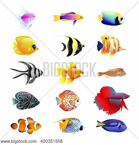 Tropical Fish Cartoon Realistic Set. Multi-colored Set Of Nine Different Types Of Coral Reef Fishes