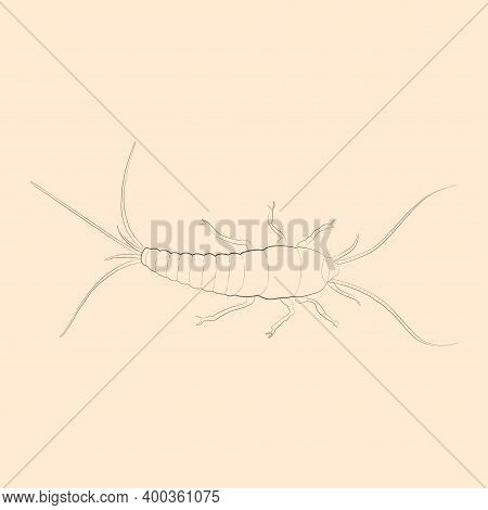 Silverfish Illustration. Hand Drawn Isolated Sketch. Vector.