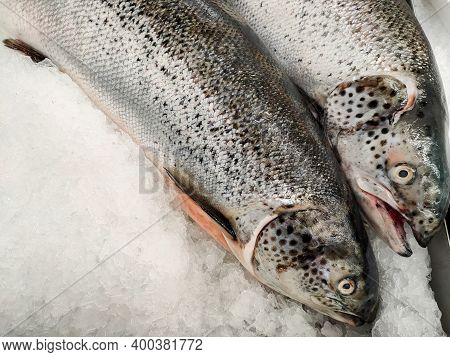Salmon Fish In The Market Waiting For Sale In Supermarkets Close Up. Use Celebrate The Festival