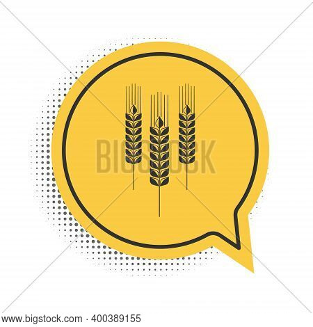 Black Cereals Icon With Rice, Wheat, Corn, Oats, Rye, Barley Icon Isolated On White Background. Ears