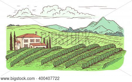 Rural Countryside Landscape With Vineyard Cartoon Vector Illustration Isolated.