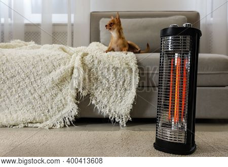 Chihuahua In Living Room, Focus On Modern Electric Halogen Heater