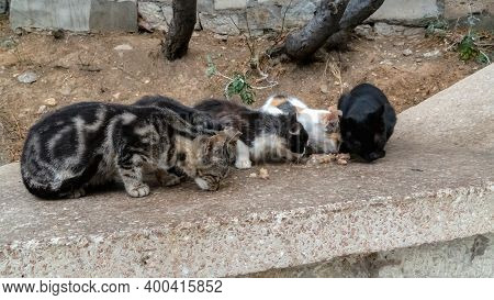 Stray Cats Eat Cat Food On The Cobblestones. People Feed Stray Animals