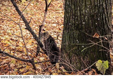 A Beautiful Striped Street Cat Next To A Tree On A Background Of Fallen Leaves.
