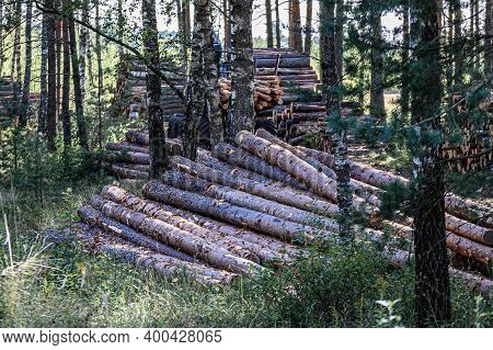 Illegal Logging. Piles Of Logs In The Middle Of The Forest After Cutting.