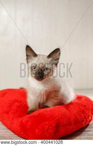 Kitten on a pillow in the shape of a heart. Baby cat celebrates Valentine's Day. Cozy romantic pet