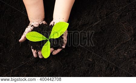 Top View Of Child Hand Planting Young Tree Seedling On Black Soil At The Garden, Concept Of Global P