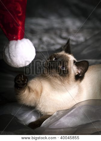 Cat playing with santa hat
