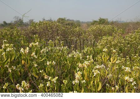 Scrubland In Keoladeo Ghana National Park At Bharatpur. Rajasthan. India. Rajasthan. India.