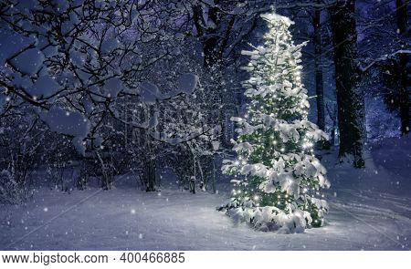 Christmas Tree in Snow, Sweden forest