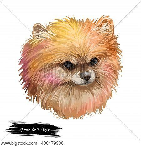 German Spitz Puppy Dog Puppy Breed Digital Art Illustration Isolated On White. Popular Puppy Portrai