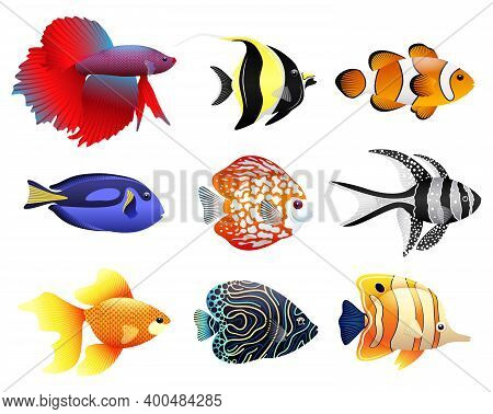 Sea Collection Of Tropical Fish. Different Types Of Fish, Underwater Animals.
