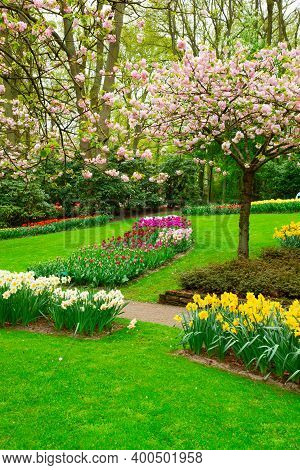 Colourful Blooming Cherry Tree And Flowerbed In An Spring Formal Garden