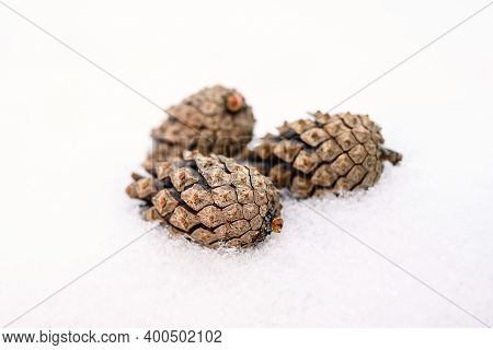 Three Pine Cones On The White Snow. Winter Fir Cones On A Blurry Background