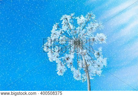 Crystal Snow-flowers Against The Blue Sky. Winter Wonder Of Nature Crystals Of Frost.winter Scene La