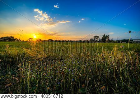 Beautiful Clump Of Grass Wild Flower A Warm Light And Green Field Cornfield Or Corn In Asia Country