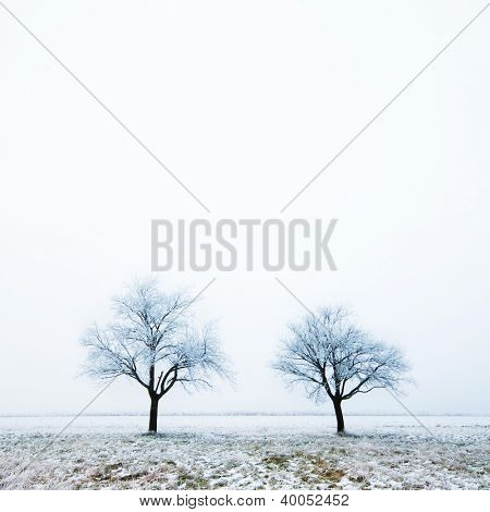 Two frozen trees on a foggy day