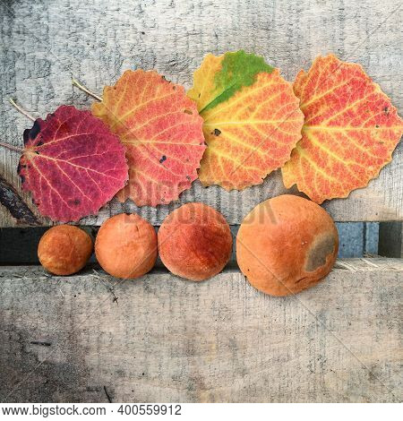 Four Aspen Boletus With Orange Caps And Four Yellow-red Aspen Leaves Lie On Wooden Planks