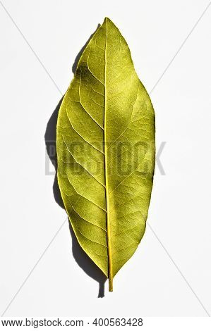 Daphne Leaf, Aromatic Bay Leaf, Laurus Nobilis Leaf, Isolated On White Background
