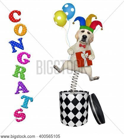 A Dog Comic In A Jester Hat With Balloons Is Jumping Out Of A Round Gift Box. Congrats. White Backgr