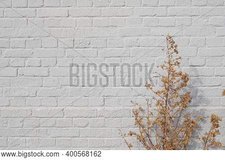 Background Of Grey Old Brick Wall And Gold Dry Plants