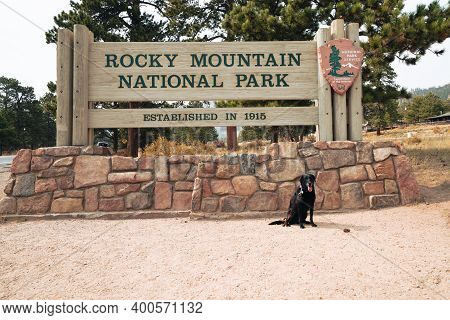 Colorado, Usa - September 18, 2020: Black Labrador Retriever Dog Poses By The Rocky Mountain Nationa