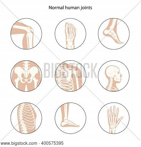 Set With Spine, Knee, Skull And Other Human Joints Icon. Normal Bones Anatomy. Skeletal X Ray Medica