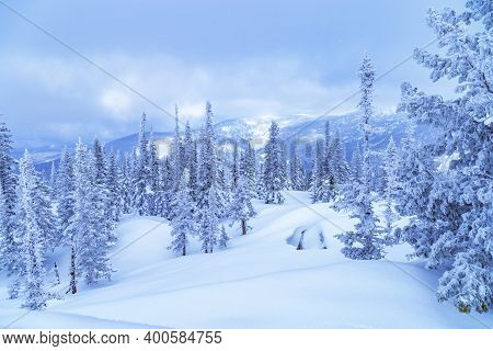 Winter Coniferous Forest On Top Of Mount Utua. Snow Falling, Blue Sky And White Snowfall. Nature Vie