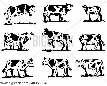 Breeding Cow. Animal Husbandry. Sketches On A Grey Background