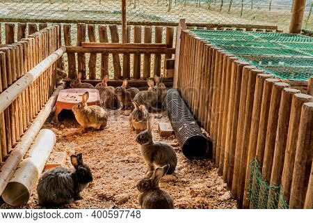 Several Rabbits In Wood Log Enclosure At Public Park On Autumn Day. Selective Focus On Rabbits At Re