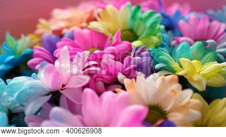 Rainbow Daisies. Rainbow Flower. Bouquets Of Blossom Rainbow Flowers, Selective Focus. Multi Colored