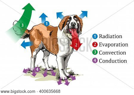 Vector Schematic Illustration Of Dog Heat Transfer.