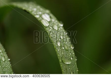 Dewdrops On Fresh Green Grass Or Wet From Water Raindrops. Selective Focus. Shine Like Diamonds.