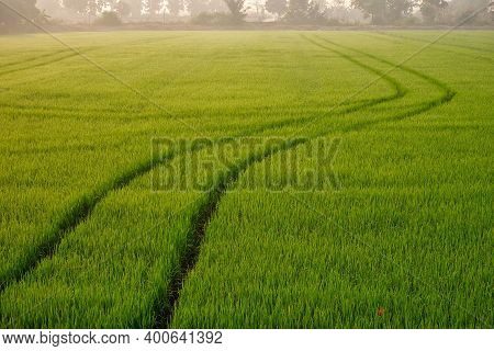 Focus On Foreground Of Curve Line Sprayer Tractor Tracks After Completely Spraying Fertilizer Or Her