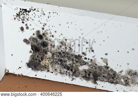 The Image Of Black Mold On The Wall And Floor In Vector.