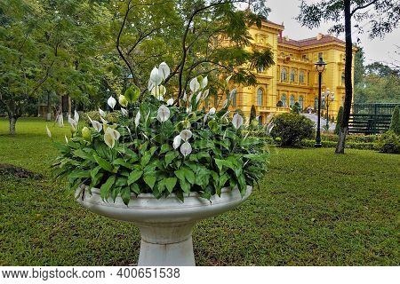 In The Park, Graceful Spathiphyllum Wallisii Bloom In A White Marble Vase. White Flowers With Elonga