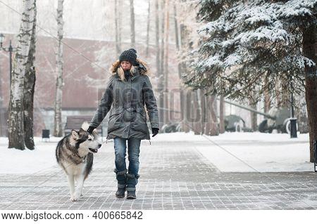 Woman Walking With Alaskan Malamute In Winter City.