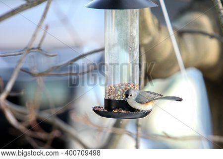 Tufted Titmouse on bird feeder in winter