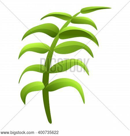 Garden Hibiscus Long Leaf Icon. Cartoon Of Garden Hibiscus Long Leaf Vector Icon For Web Design Isol